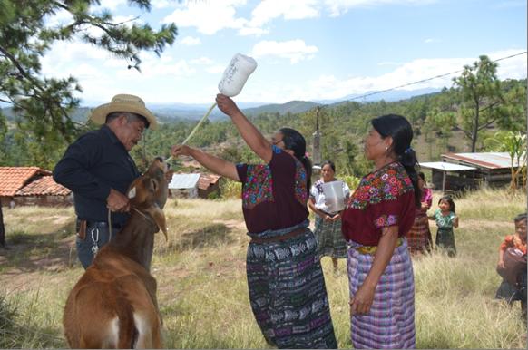 Desarrollo de la agroindustria rural impulsada por mujeres campesinas indígenas Maya del Departamento de Totonicapán (Guatemala)